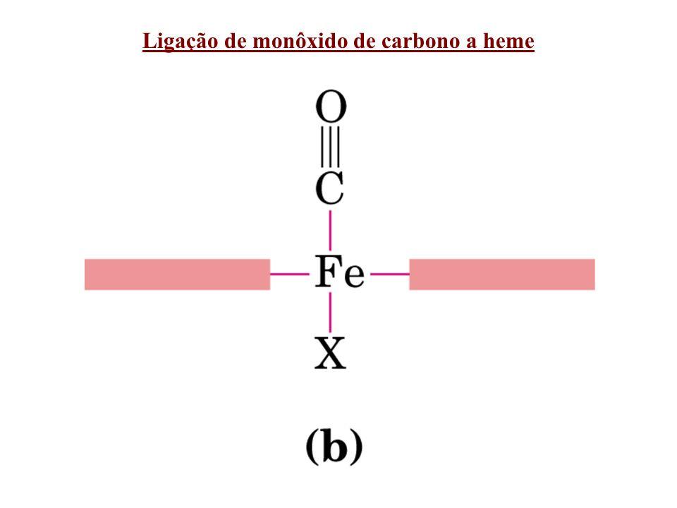 Aminoácidos chaves de mioglobina que interagem com heme e O 2 His proximal His distal