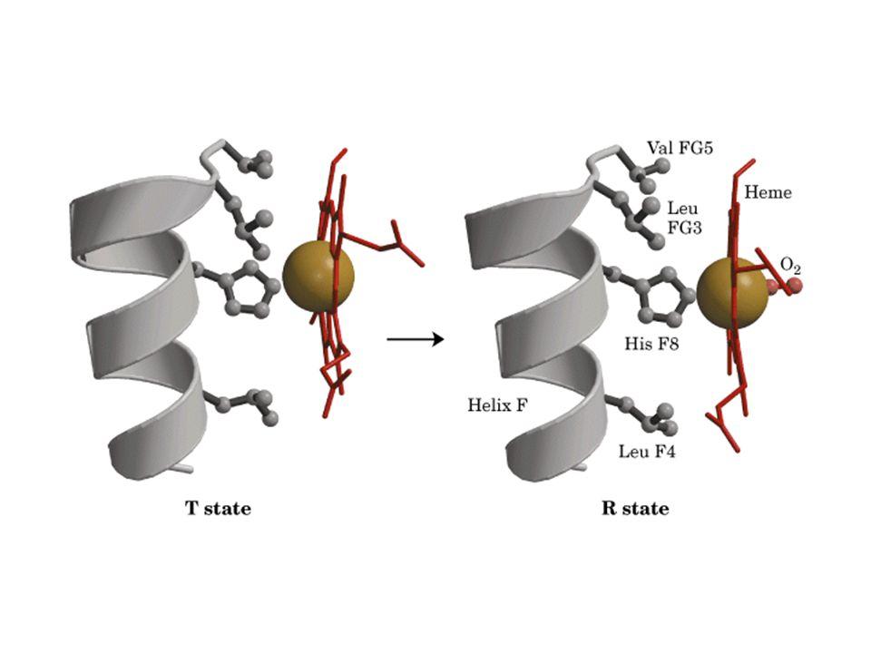 Curva hiperbólica de Ligação de baixa afinidade Curva hiperbólica de Ligação de baixa afinidade Curva sigmoidal de Ligação cooperativa Ligação de oxigênio a hemoglobina