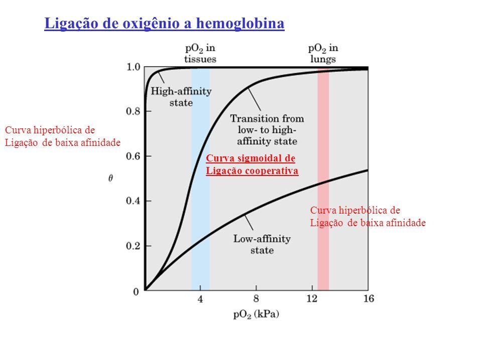 Dois modelos moleculares para explicar ligação cooperativa Modelo MWC Monod, Wyman Changeux (simultânea) Modelo sequencial TR