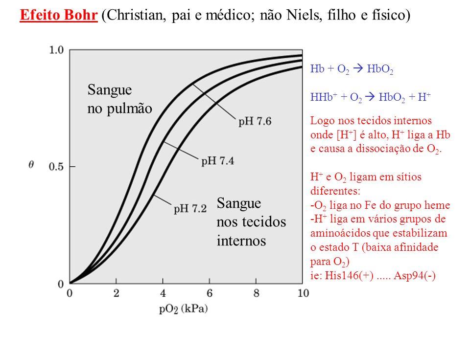 CO 2 + H 2 N----( -amino da cadeia) H + + - O 2 C-NH---- Contribui para o efeito Bohr terminal carbamino [BPG] alta em hemácias HbO 2 + BPG HbBPG + O 2