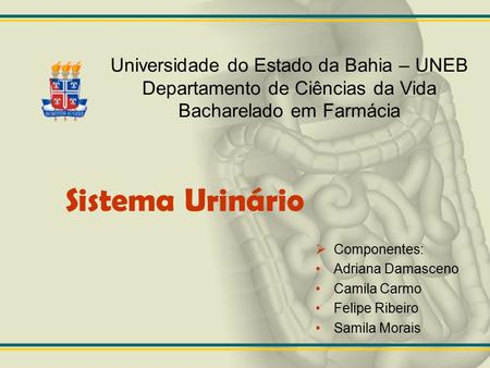Sistema Urinário Universidade do Estado da Bahia – UNEB