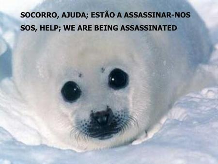 SOCORRO, AJUDA; ESTÃO A ASSASSINAR-NOS SOS, HELP; WE ARE BEING ASSASSINATED.