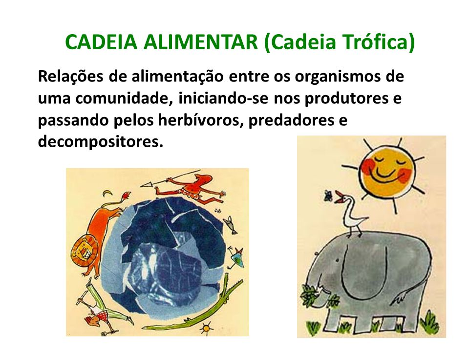 CADEIA ALIMENTAR (Cadeia Trófica)