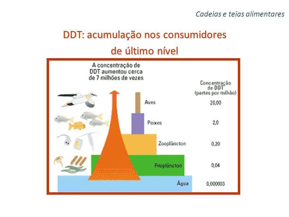 DDT: acumulação nos consumidores de último nível
