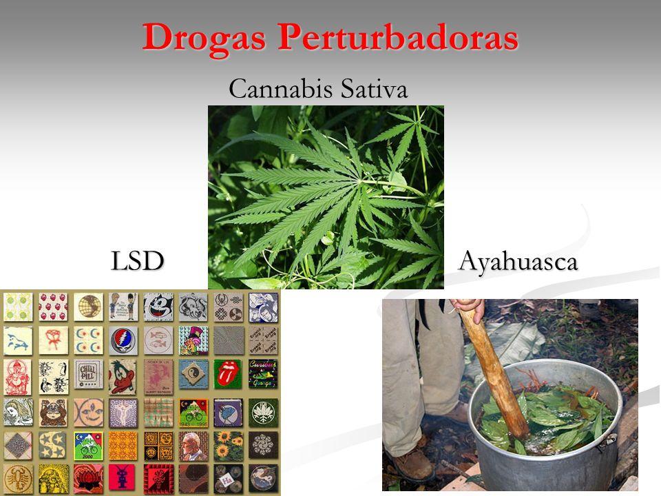 Drogas Perturbadoras Cannabis Sativa LSD Ayahuasca Ayahuasca
