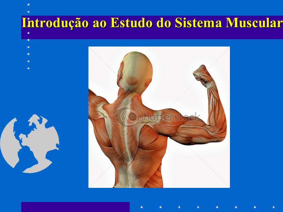 Magnífico El Diagrama De Sistema Muscular Marcada Embellecimiento ...