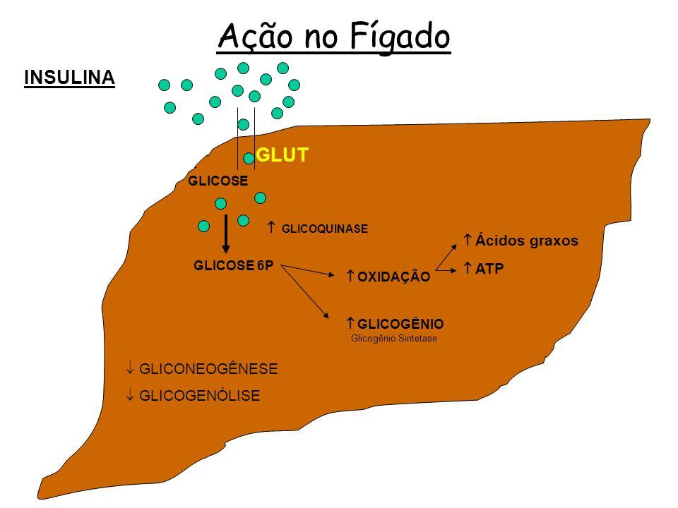 Ação no Fígado INSULINA GLUT  GLICONEOGÊNESE  GLICOGENÓLISE GLICOSE