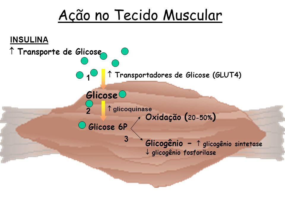  Transporte de Glicose  Transportadores de Glicose (GLUT4)