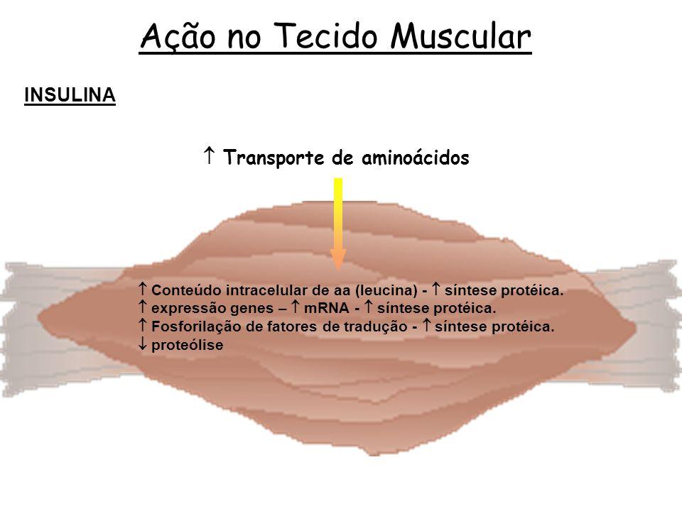  Transporte de aminoácidos