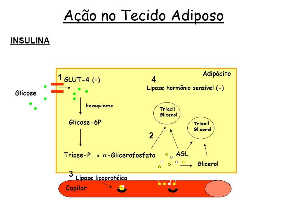 Ação no Tecido Adiposo INSULINA 1 4 2 3 Glicose GLUT-4 (+) Glicose-6P
