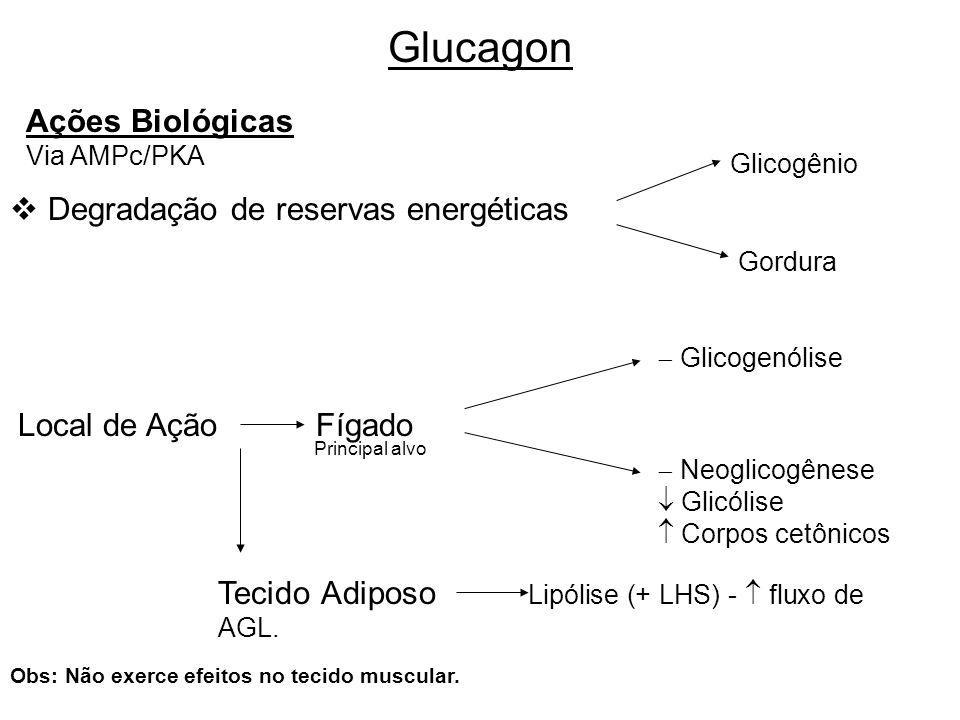 Glucagon Ações Biológicas Degradação de reservas energéticas