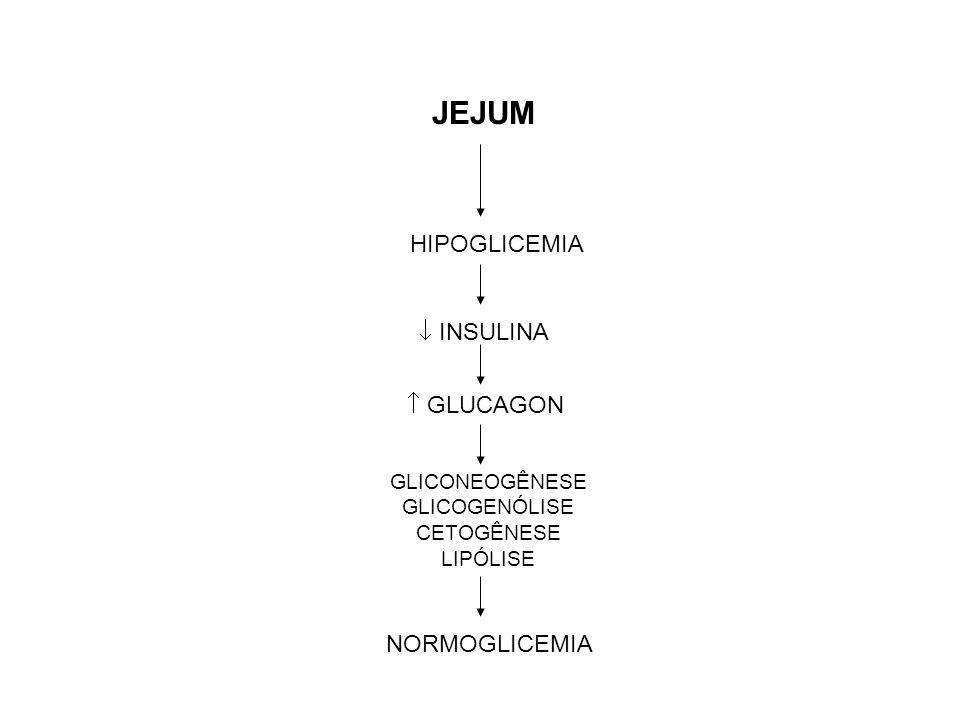 GLICONEOGÊNESE GLICOGENÓLISE CETOGÊNESE LIPÓLISE