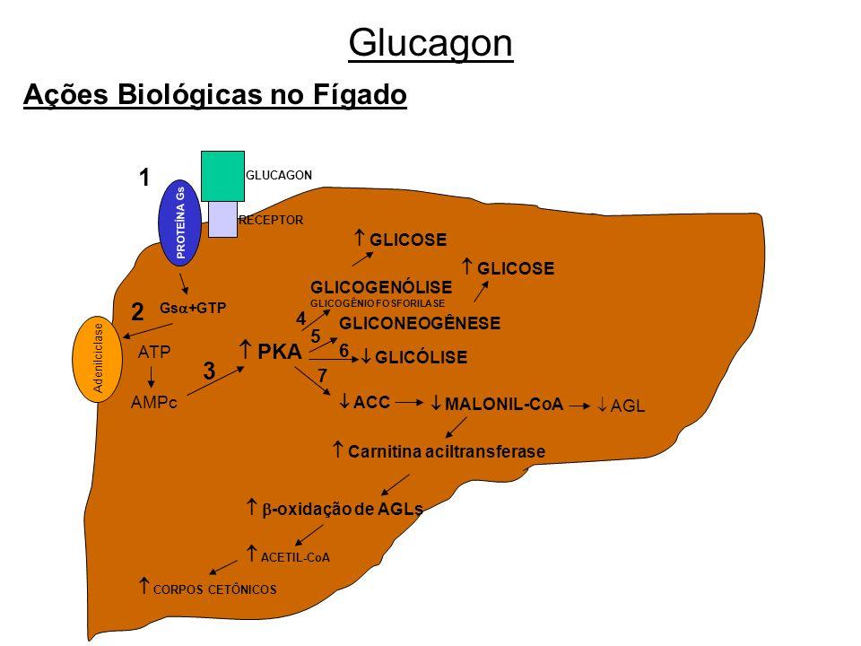 Glucagon Ações Biológicas no Fígado 1 2 3  PKA  GLICOSE  GLICOSE 4