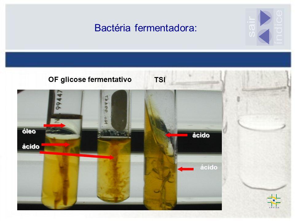 Bactéria fermentadora: