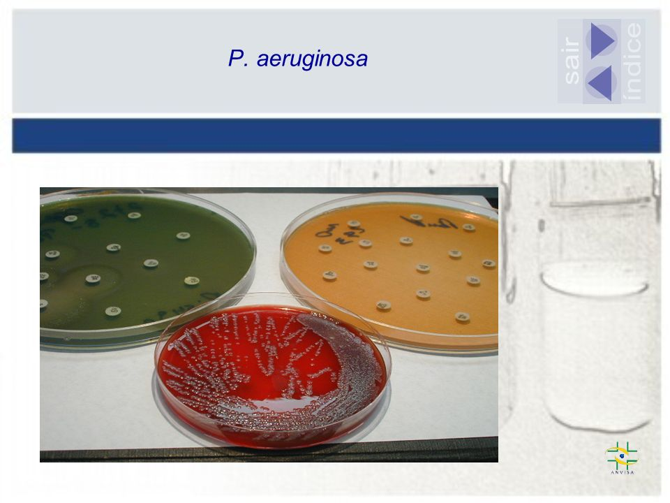 P. aeruginosa sair índice