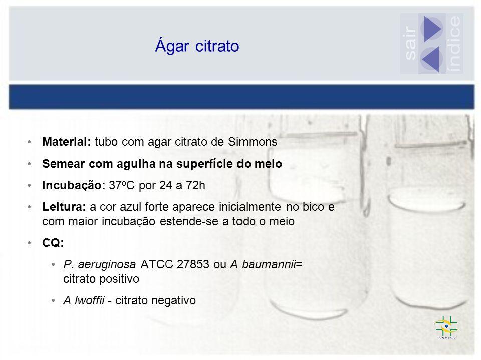 índice sair Ágar citrato Material: tubo com agar citrato de Simmons