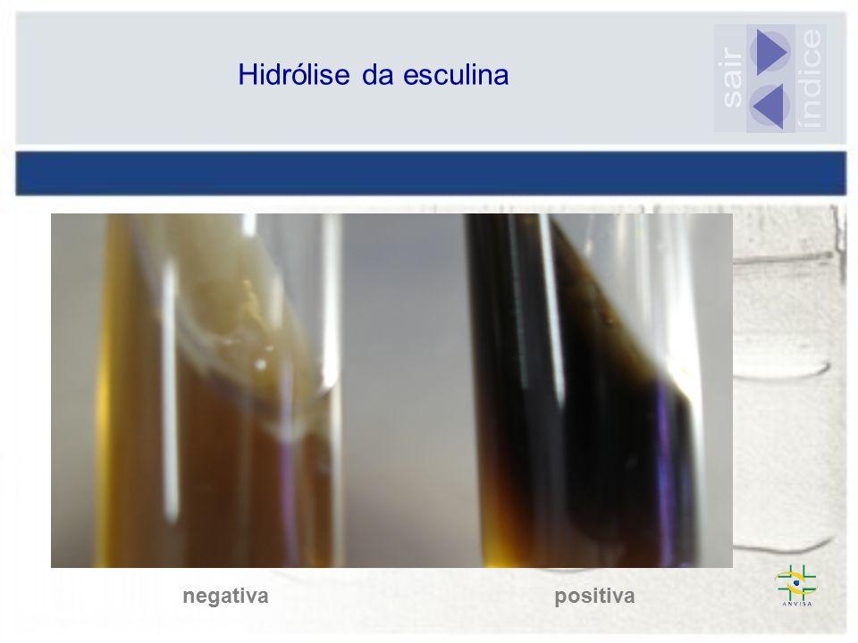 Hidrólise da esculina sair índice negativa positiva