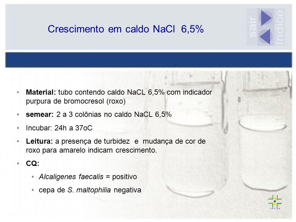 Crescimento em caldo NaCl 6,5%