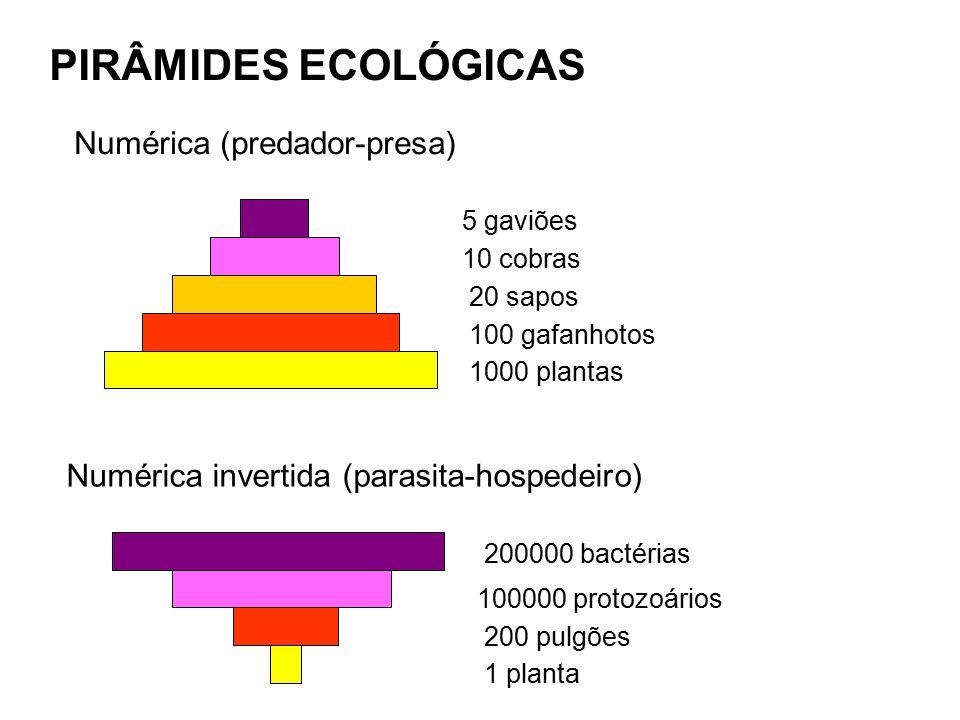 PIRÂMIDES ECOLÓGICAS Numérica (predador-presa)