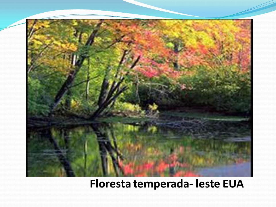Floresta temperada- leste EUA