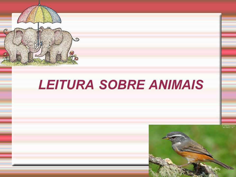LEITURA SOBRE ANIMAIS