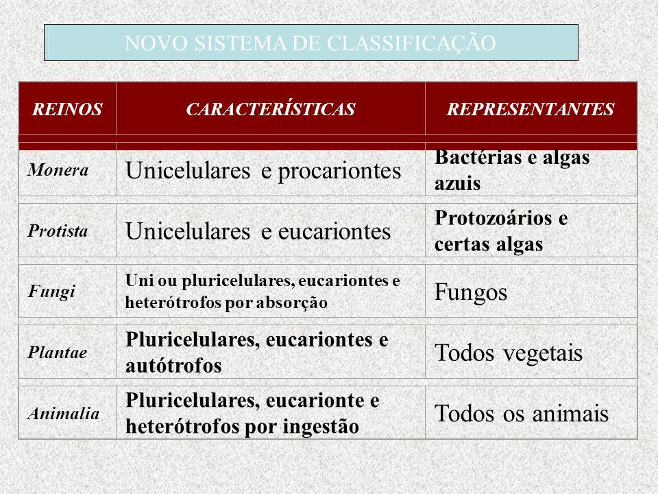 NOVO SISTEMA DE CLASSIFICAÇÃO