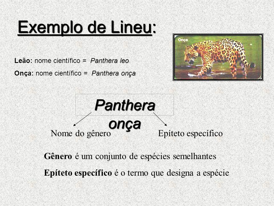 Exemplo de Lineu: Panthera onça Nome do gênero Epíteto específico