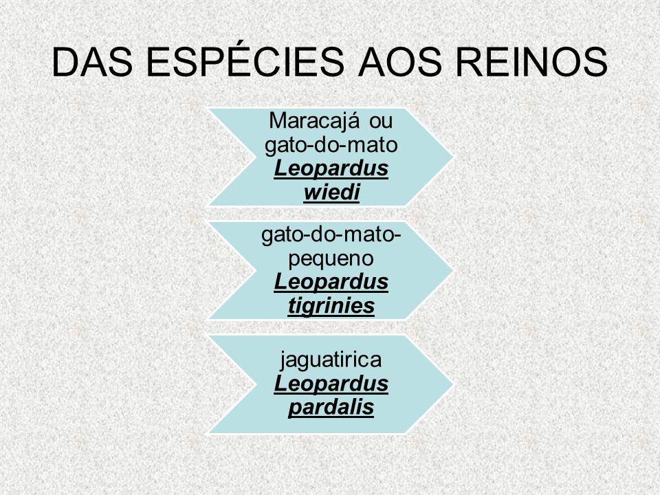 DAS ESPÉCIES AOS REINOS