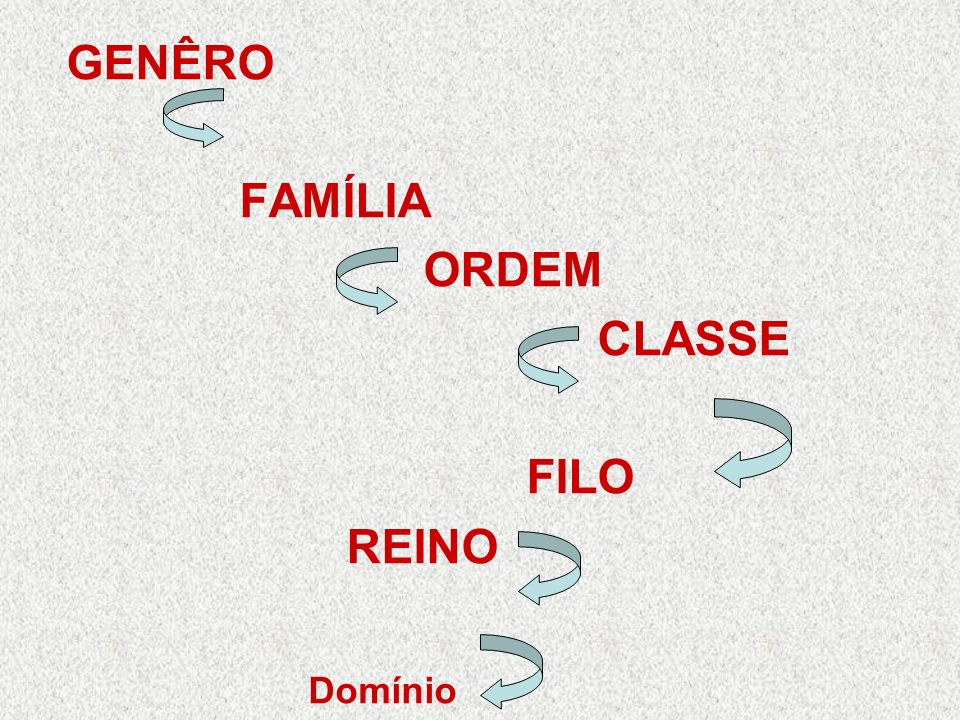 GENÊRO FAMÍLIA ORDEM CLASSE FILO REINO Domínio