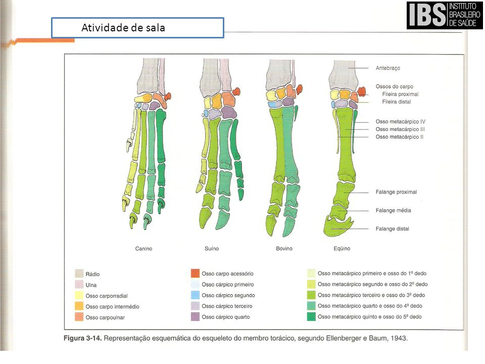 Noções de anatomia e fisiologia