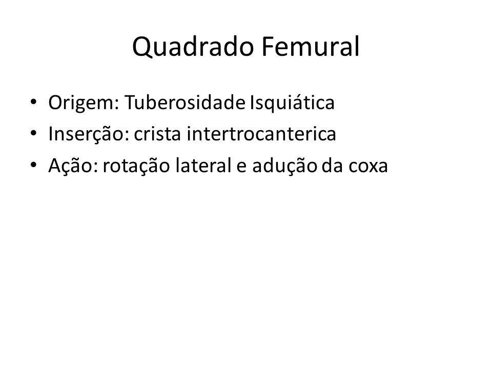 Quadrado Femural Origem: Tuberosidade Isquiática