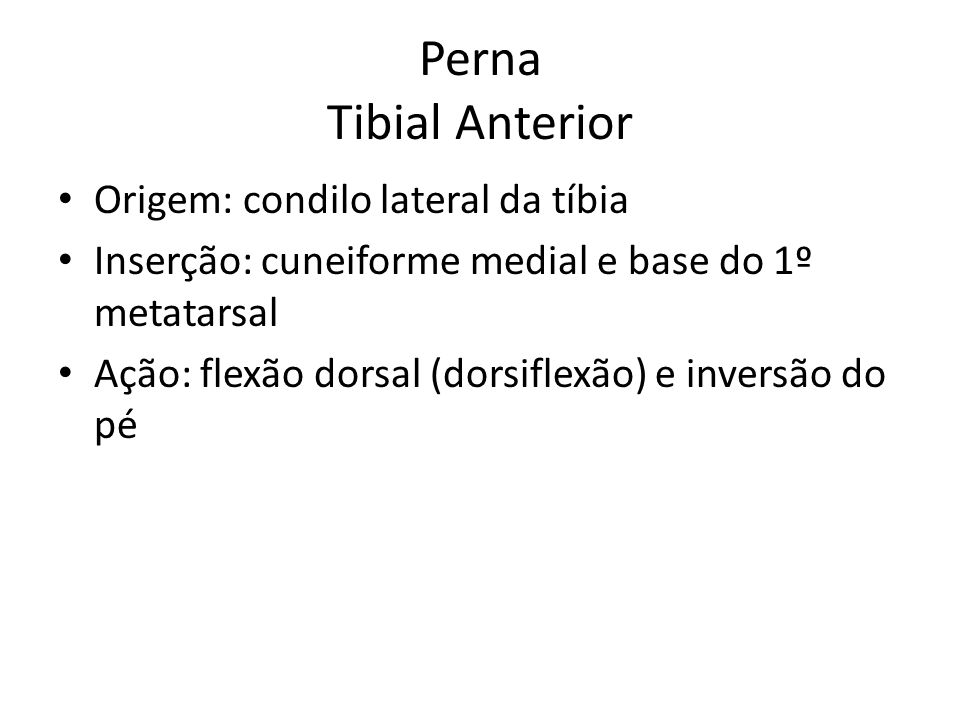 Perna Tibial Anterior Origem: condilo lateral da tíbia