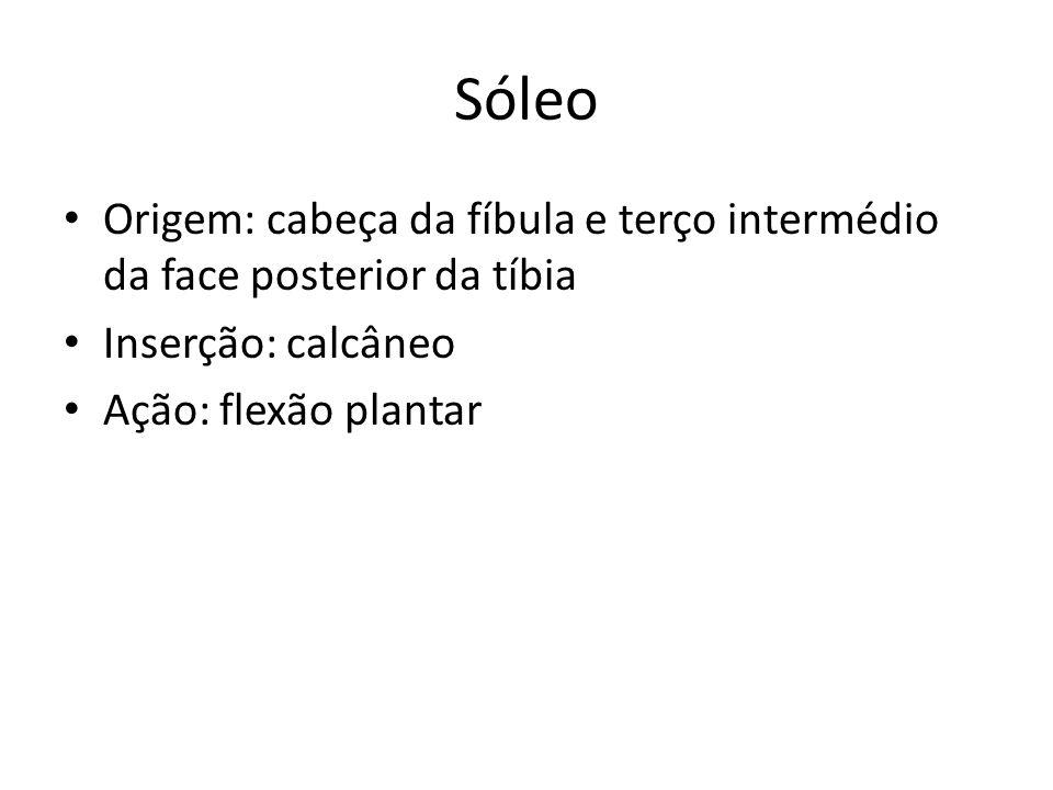 Sóleo Origem: cabeça da fíbula e terço intermédio da face posterior da tíbia.