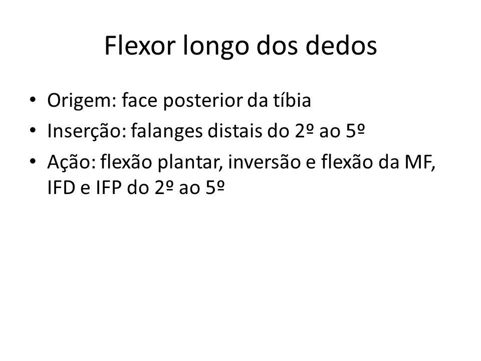 Flexor longo dos dedos Origem: face posterior da tíbia