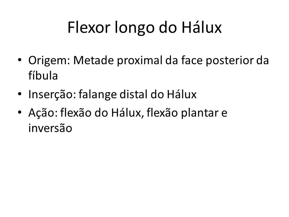 Flexor longo do Hálux Origem: Metade proximal da face posterior da fíbula. Inserção: falange distal do Hálux.