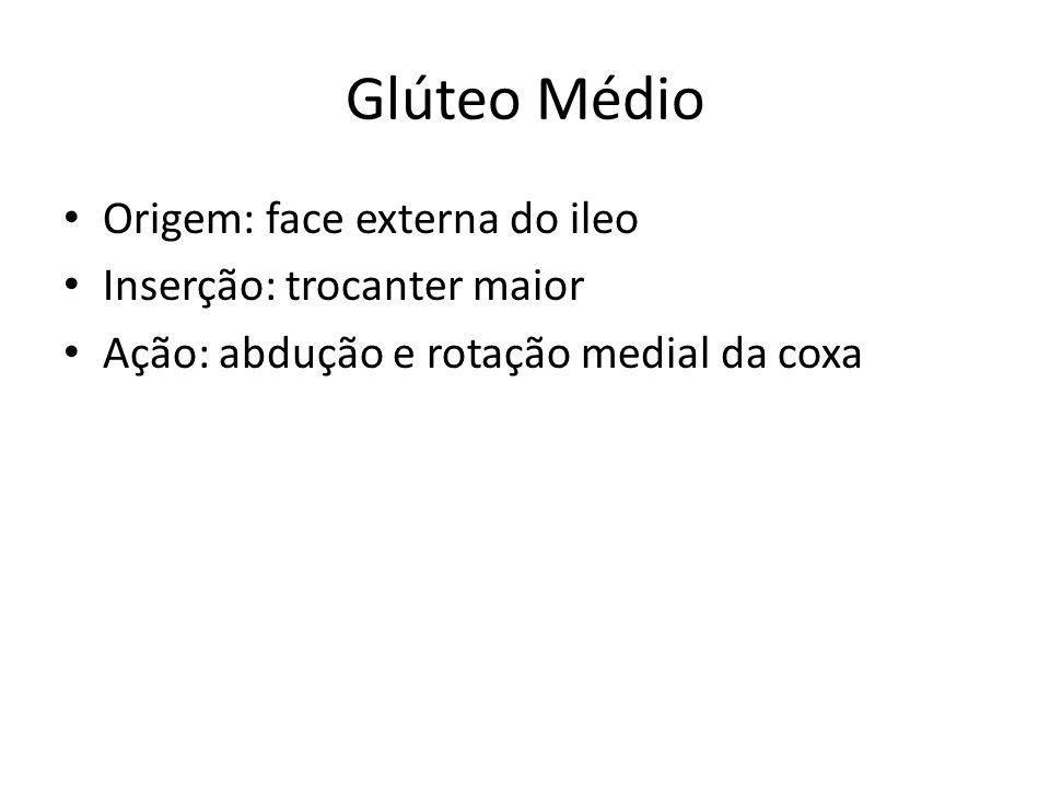 Glúteo Médio Origem: face externa do ileo Inserção: trocanter maior
