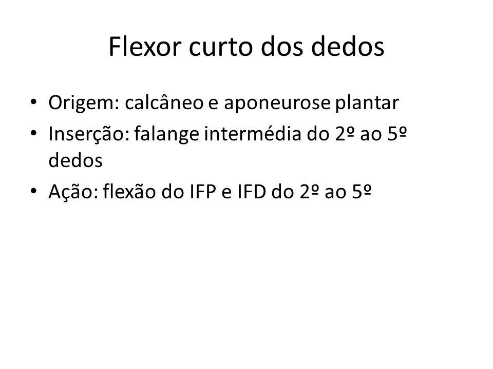 Flexor curto dos dedos Origem: calcâneo e aponeurose plantar