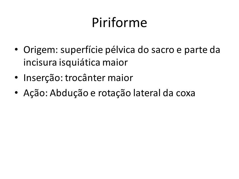 Piriforme Origem: superfície pélvica do sacro e parte da incisura isquiática maior. Inserção: trocânter maior.