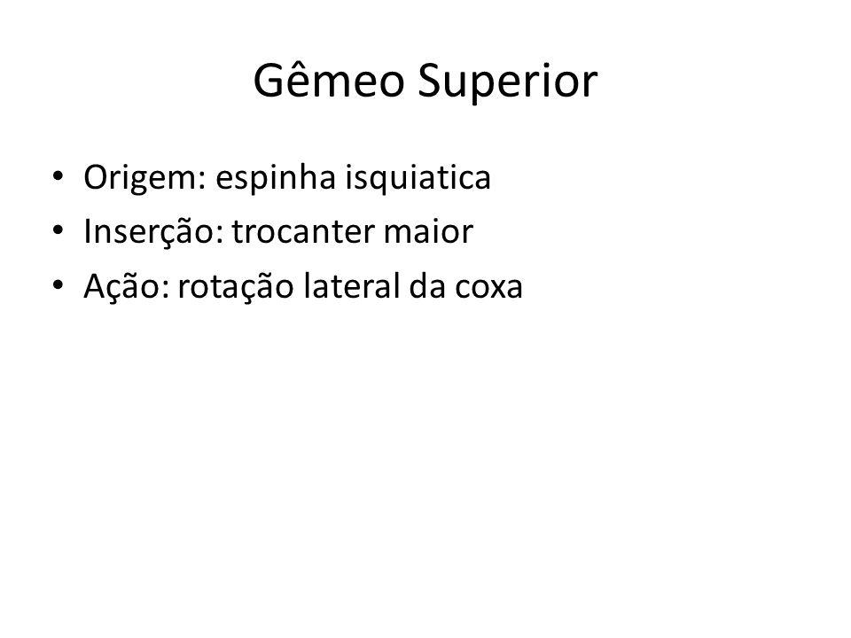 Gêmeo Superior Origem: espinha isquiatica Inserção: trocanter maior