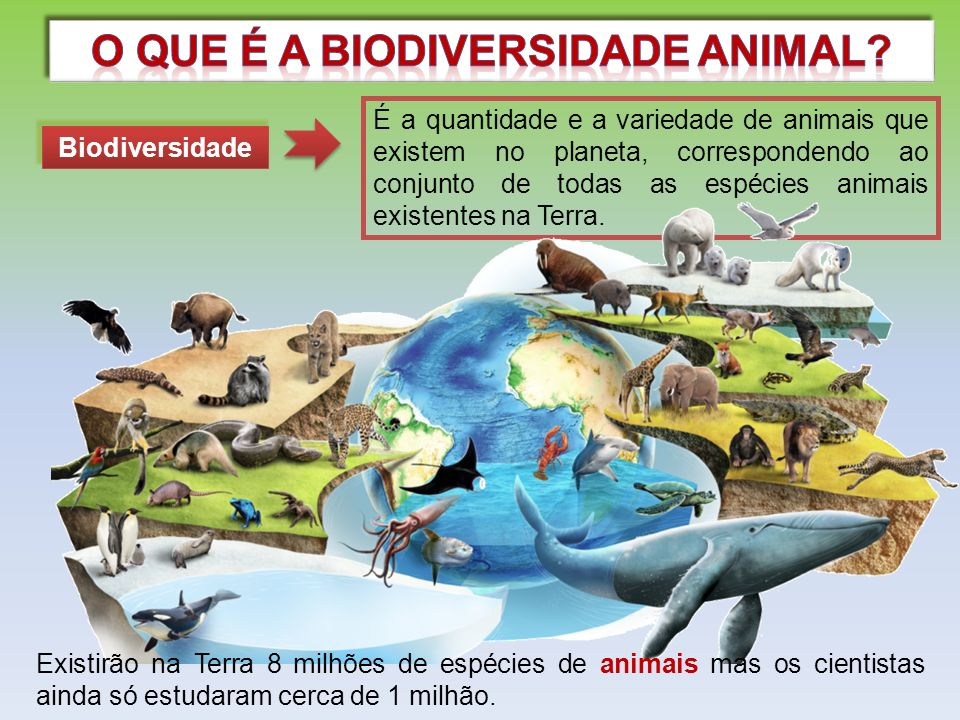 Import ncia da biodiversidade animal ppt carregar for O que e portador