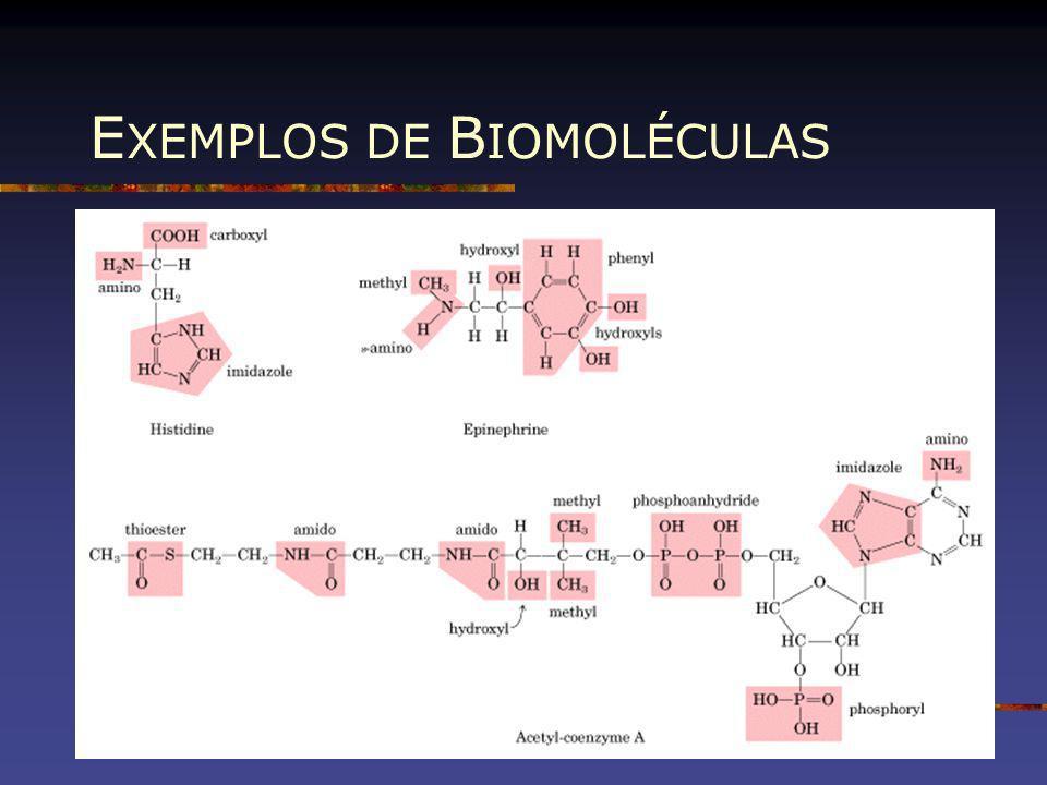 EXEMPLOS DE BIOMOLÉCULAS