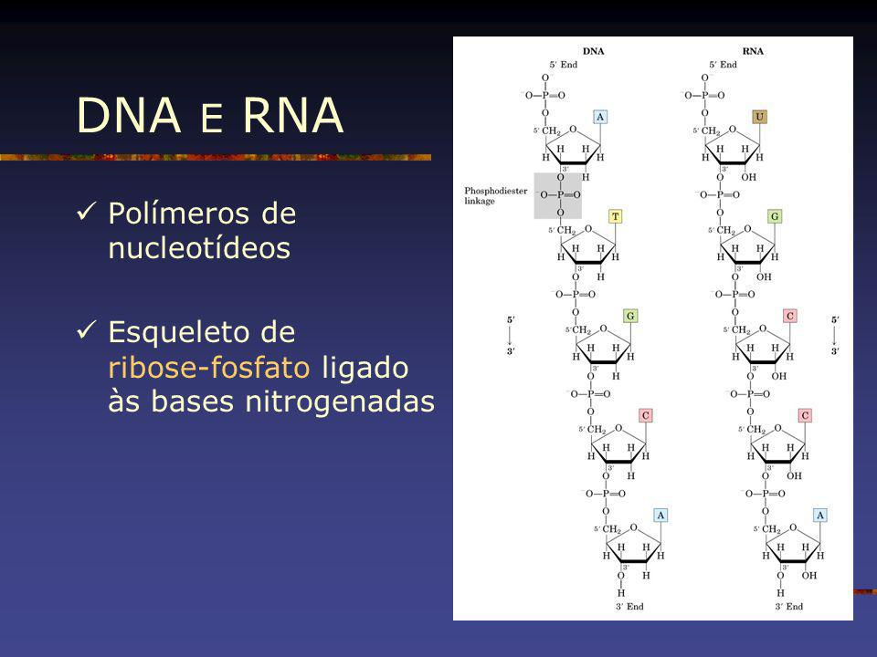 DNA E RNA Polímeros de nucleotídeos