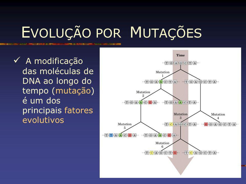 EVOLUÇÃO POR MUTAÇÕESA modificação das moléculas de DNA ao longo do tempo (mutação) é um dos principais fatores evolutivos.
