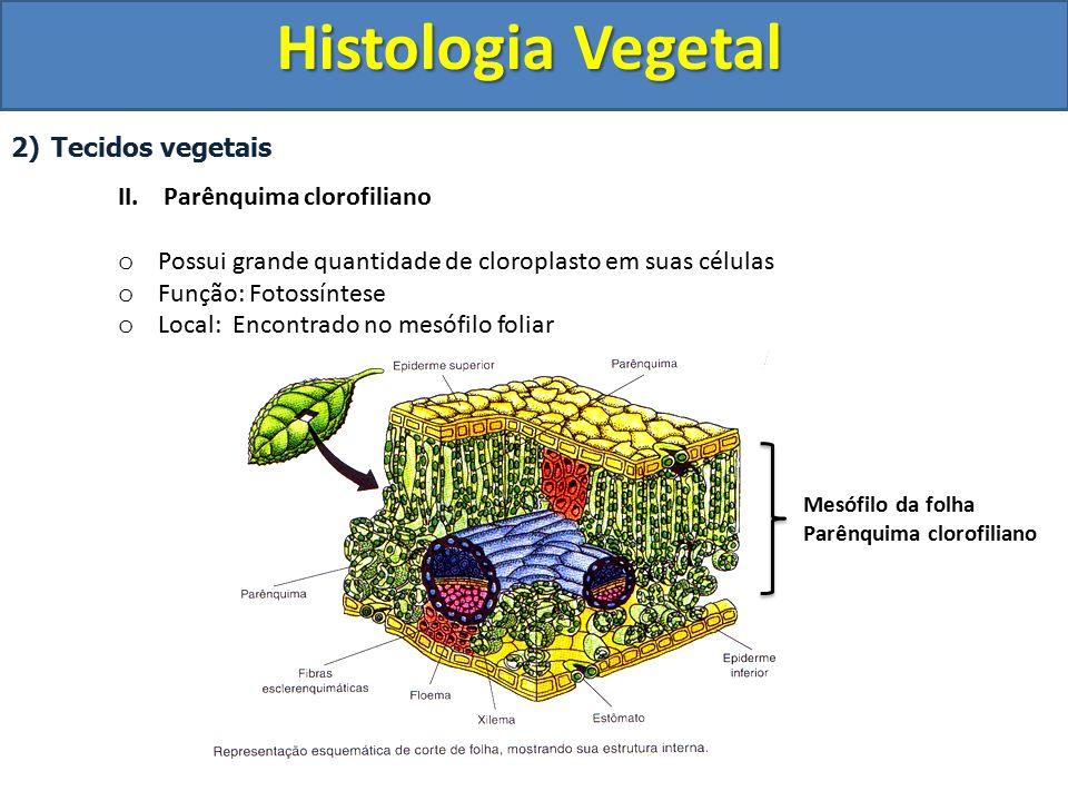 Histologia Vegetal Tecidos vegetais II. Parênquima clorofiliano