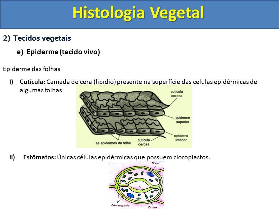 Histologia Vegetal e) Epiderme (tecido vivo) Tecidos vegetais
