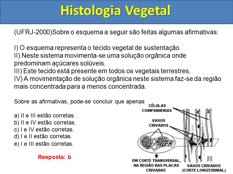 Histologia Vegetal (UFRJ-2000)Sobre o esquema a seguir são feitas algumas afirmativas: