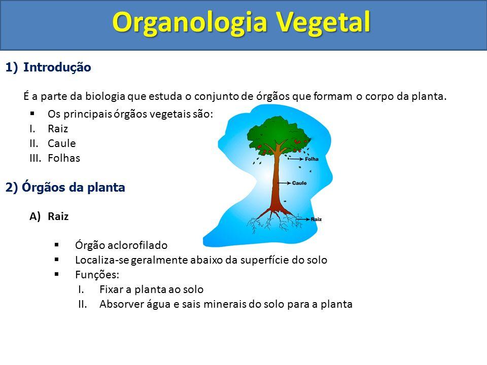 Organologia Vegetal Introdução