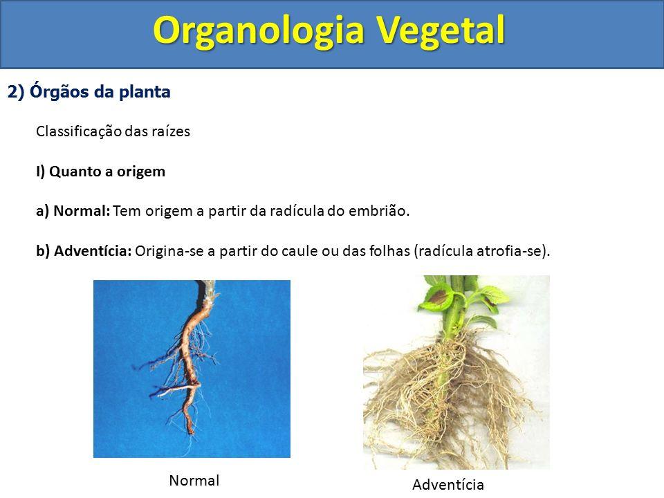 Organologia Vegetal 2) Órgãos da planta Classificação das raízes