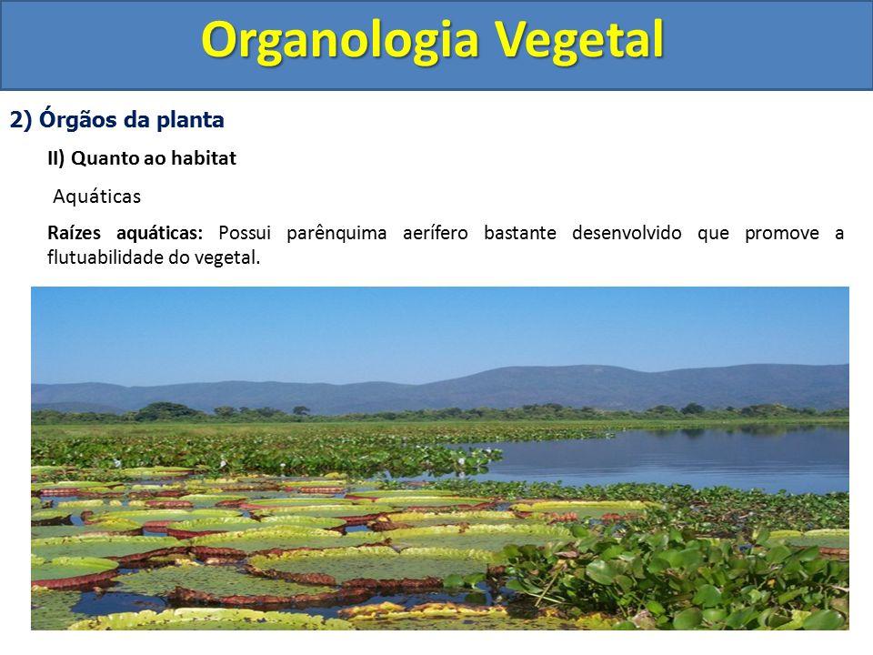 Organologia Vegetal 2) Órgãos da planta II) Quanto ao habitat