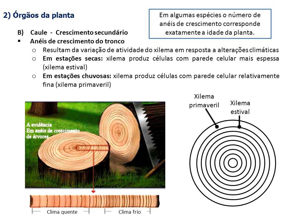 B) Caule - Crescimento secundário Anéis de crescimento do tronco